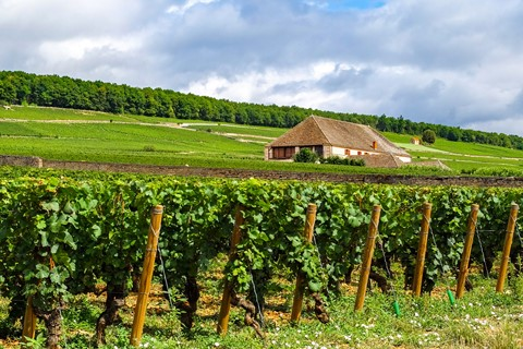 vineyards burguncy cote nuits st georges burgundy walking France